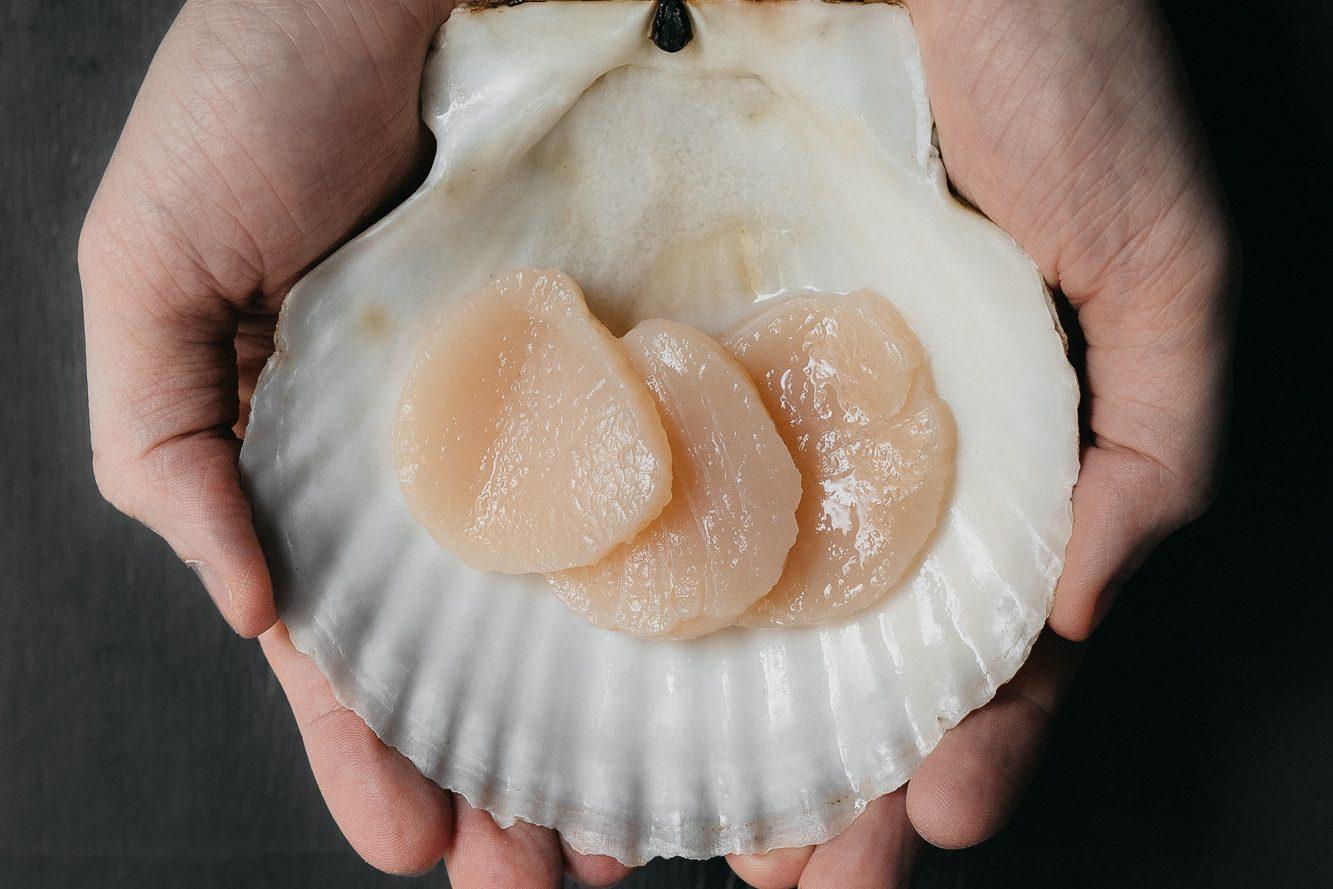 Морские<br>гребешки